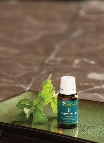 Mięta pieprzowa / Peppermint (Mentha piperita) Young Living Essential Oils | Magia-Urody.pl