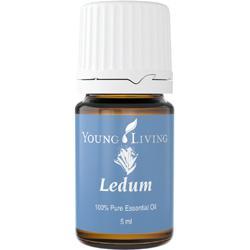 Ledum (Ledum groenlandicum) Essential Oil 5 ml
